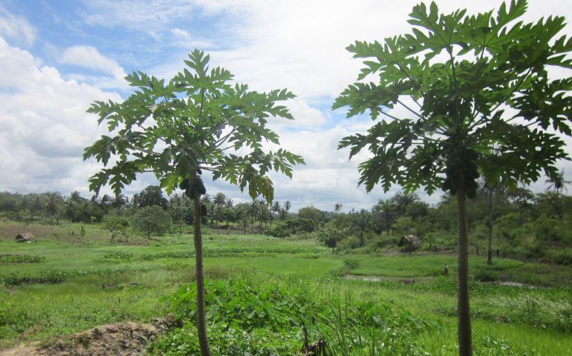 Msambweni 50 Acres